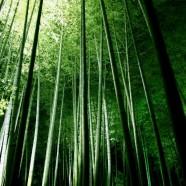 Green Computing untuk Orang Lugu